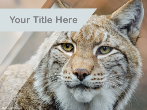 Free Lynx PPT Template