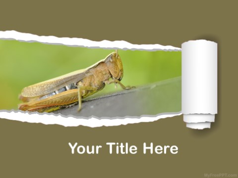 Free Macro Photography PPT Template