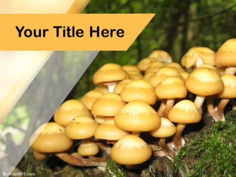 Free Mushrooms PPT Template