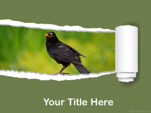 Free Myna PPT Template