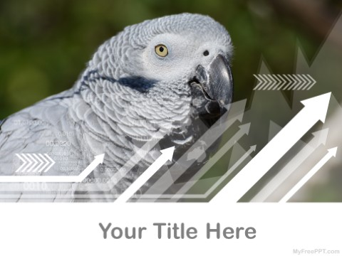 Free Parakeets PPT Template