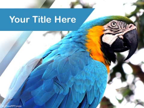 Free Parrot PPT Template