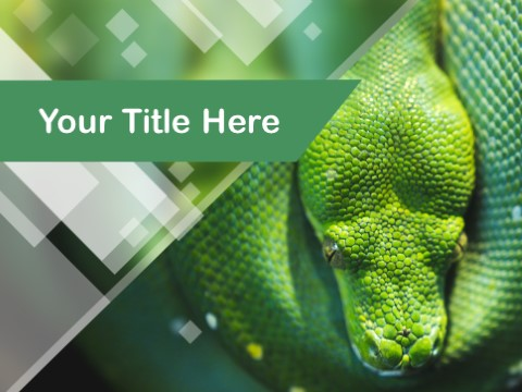 Free Reptile PPT Template