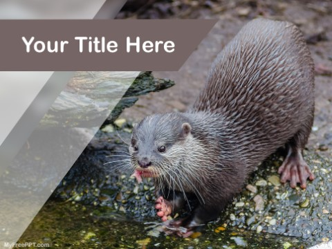 Free Rodent PPT Template