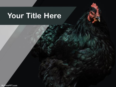 Free Rooster PPT Template