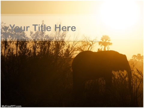 Free Safari PPT Template
