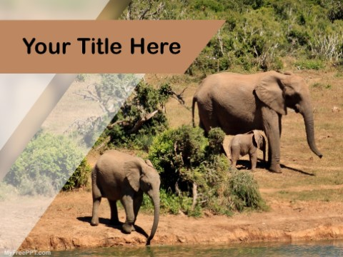 Free Save Wildlife PPT Template
