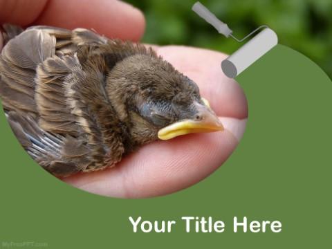 Free Saving A Baby Bird PPT Template