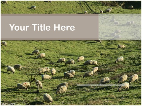 Free Sheep Farm PPT Template