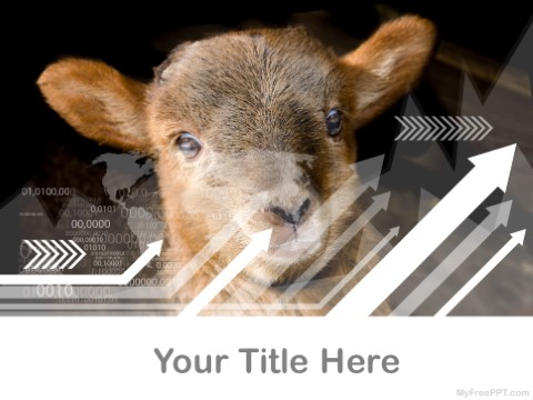 Free Sheep PPT Template