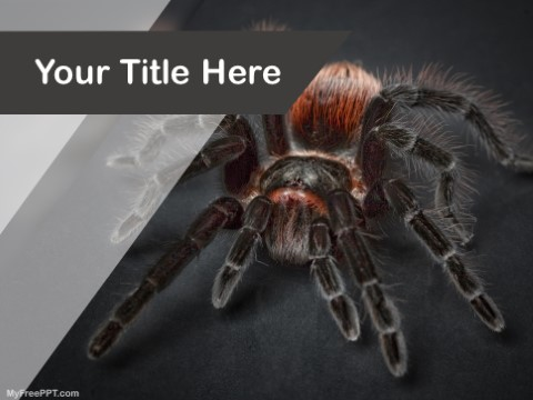 Free Spider PPT Template