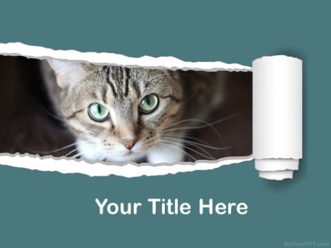 Free Tabby PPT Template