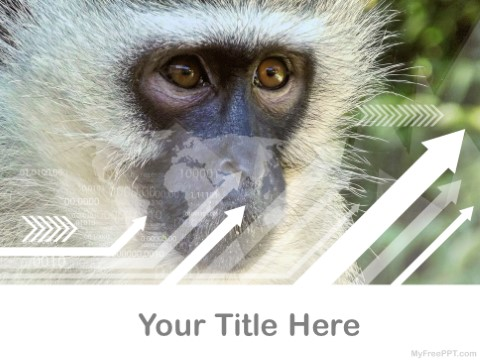 Free White And Black Monkey Langoor Pp