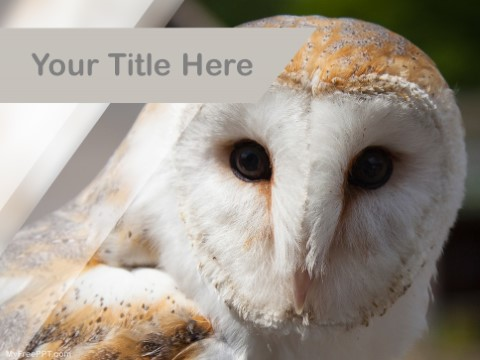 Free White Owl PPT Template