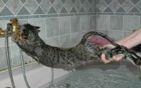 Best Way to Give a Cat a Bath