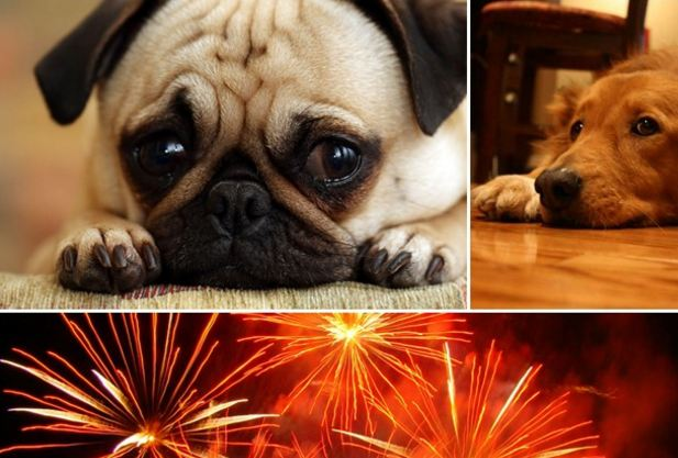 My Dog is Scared of Fireworks