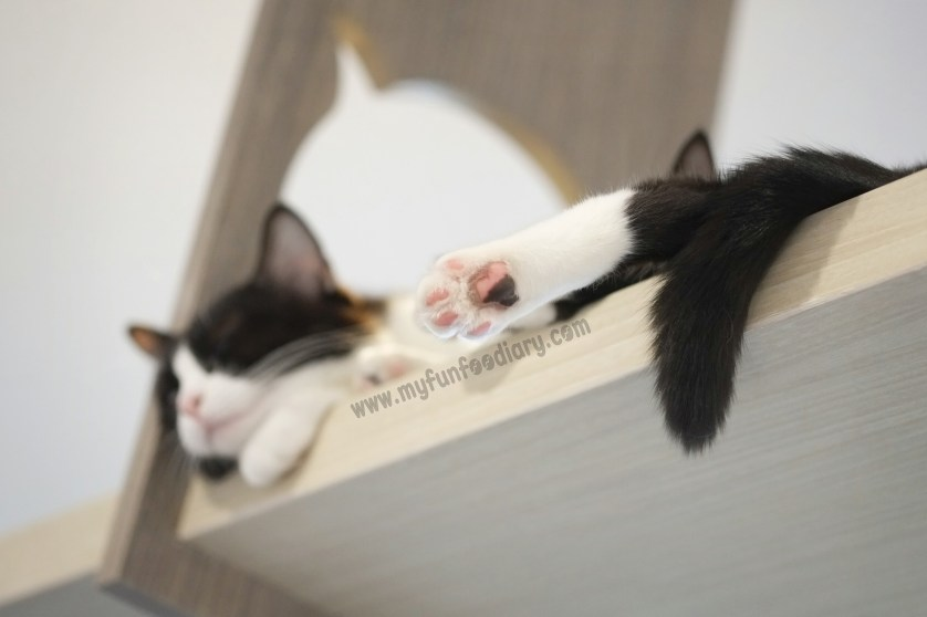 Bumble Paws at Cutie Cats Cafe by Myfunfoodiary