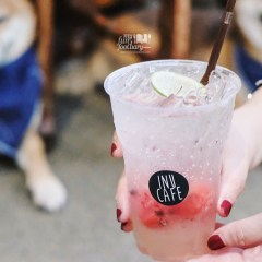 [THAILAND] Shiba Inu Dogs for Dogs Lover at Inu Cafe, Hua Hin