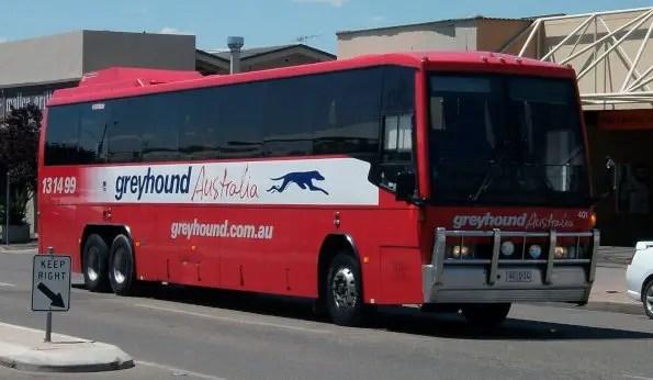 greyhound australia