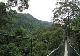 Taman Negara Park Bridge
