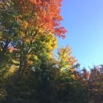 モントリオールの夏は短い…紅葉狩りの秋、すでに初霜が降りました