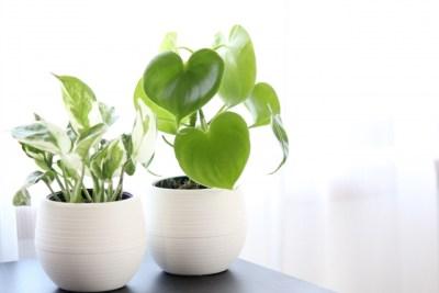 植物、プランター