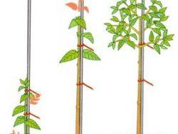 Опори для рослин