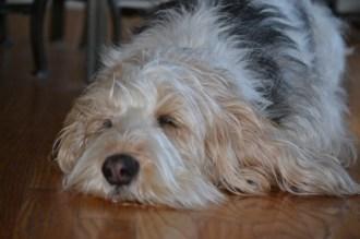 Sleeping on the hardwood floor