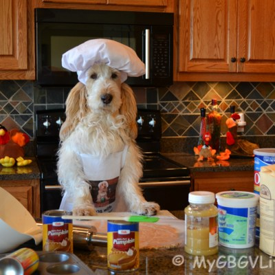 Thanksgiving Dessert For The Dog | GBGV