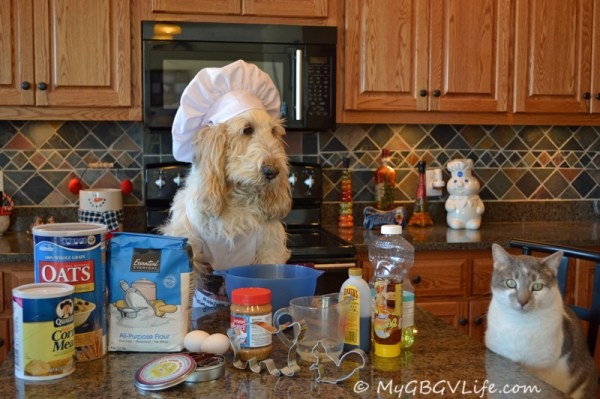 Today I will be demonstrating how to bake Nutty Squirrel Cookies