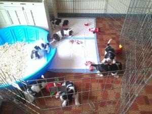 4 wks old starting to get into puppy mischief!