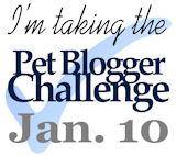 Pet Blogger Challenge | GBGV