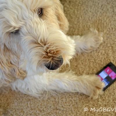 A Dog's Perspective on Windows 8 | GBGV
