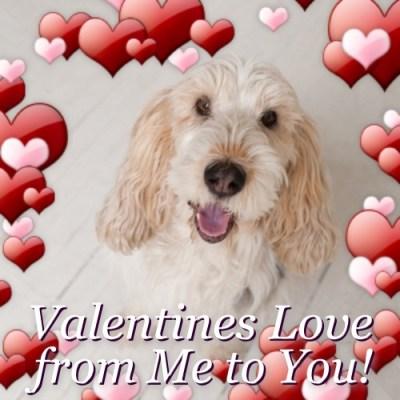 Happy Valentines Day 2013 | GBGV