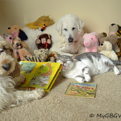My Reading Group | GBGV | Wordless Wednesday