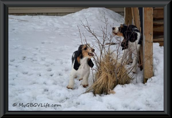 snacking puppies framed