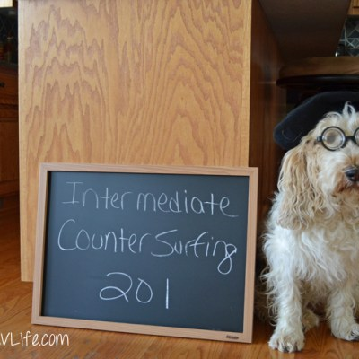 Intermediate Counter Surfing 201 | GBGV | Monday Mischief