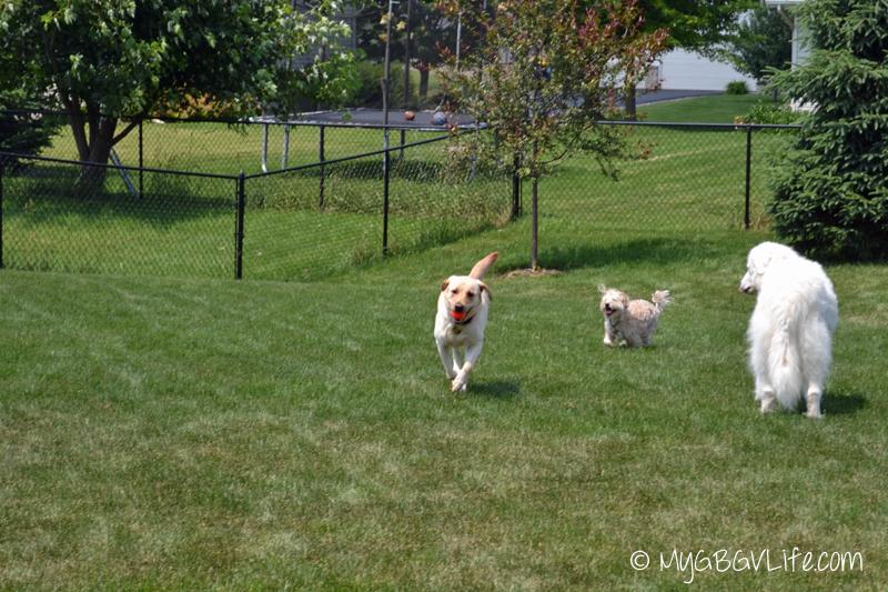 racing in the yard