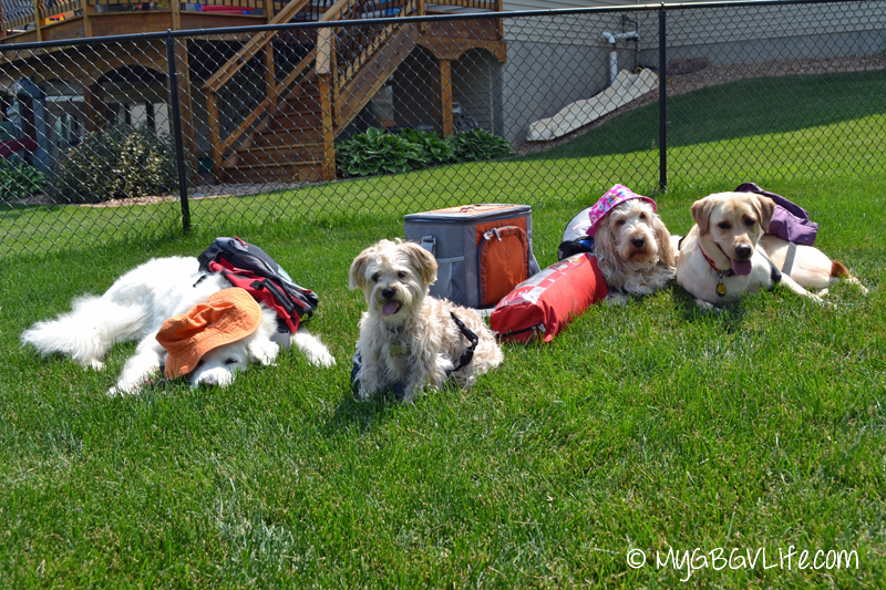 Meet the campers, left to right, Katie, Buddy, Emma & Lena