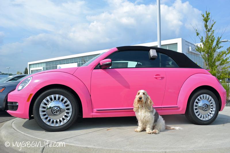 GBGV Pink Beetle
