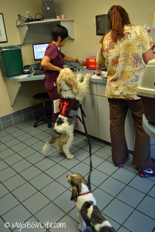 GBGV helping vets