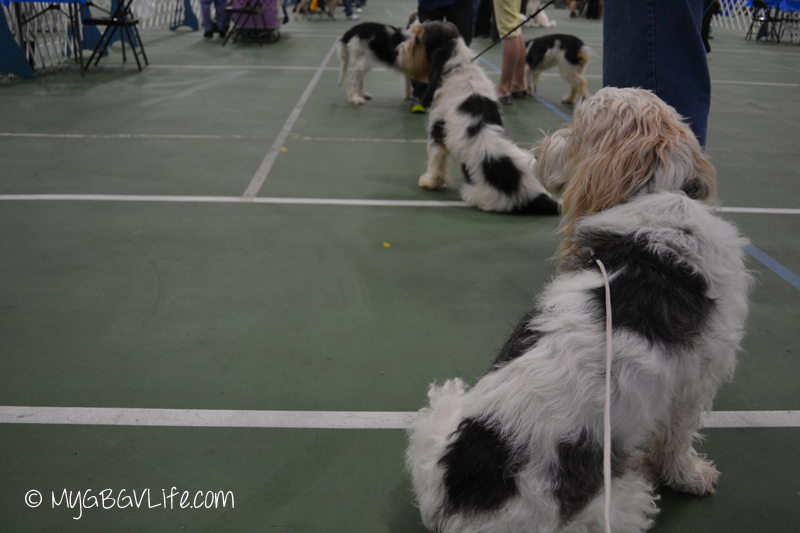 Waiting in line for my turn in the ring!