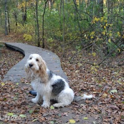 Fall Hiking | GBGV | Fitdog Friday