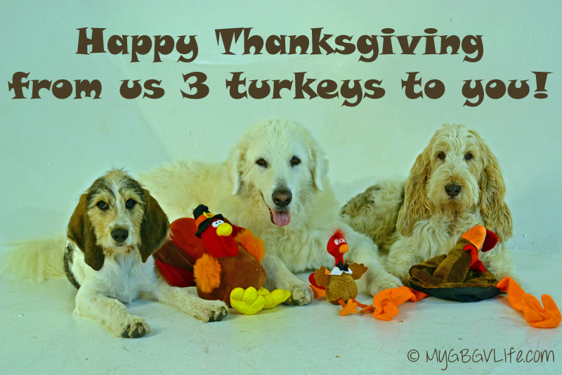 My GBGV Life Happy Thanksgiving