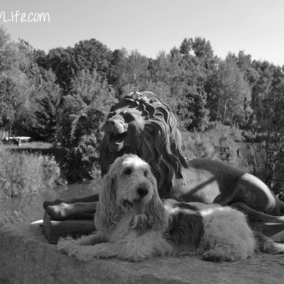 The Lion and the Hound | GBGV | Black and White Sunday
