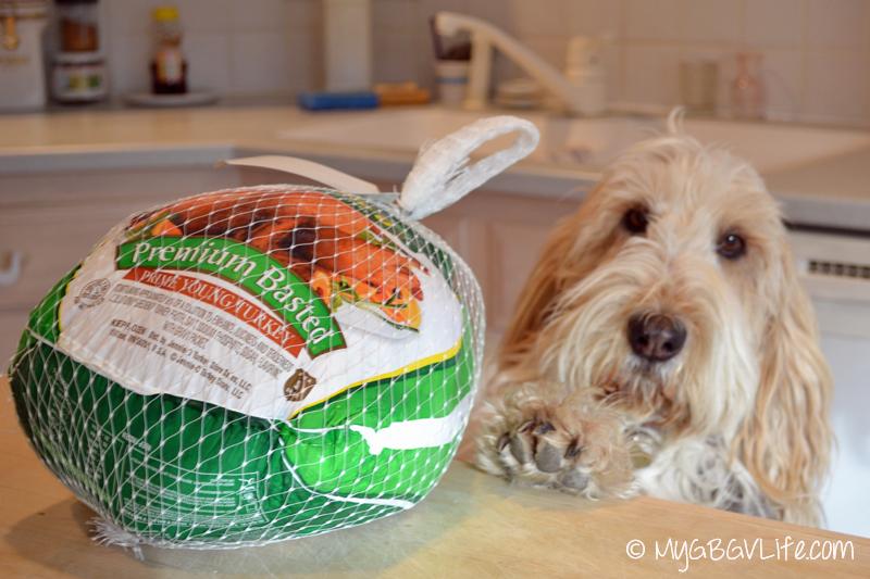 My GBGV Life I found the turkey