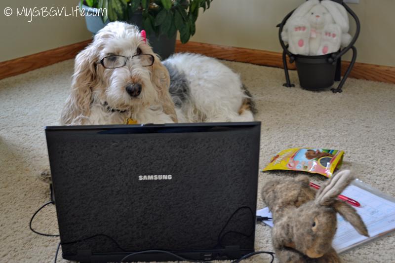 My GBGV Life Pet Blogger Challenge