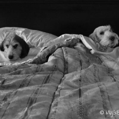 What About Lazy Dazy Sunday? | GBGV | Black and White Sunday