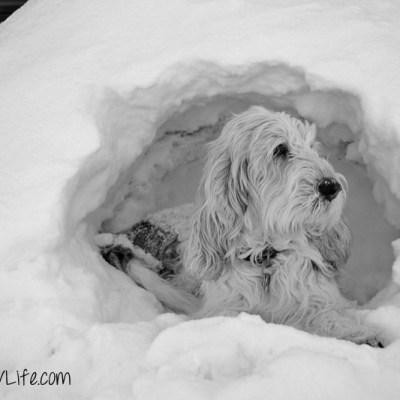 Cave Dog   GBGV   Black and White Sunday