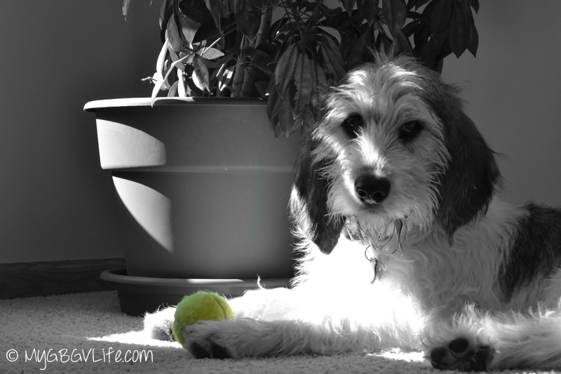 My GBGV Life tennis ball guarding in black and white with a color splash